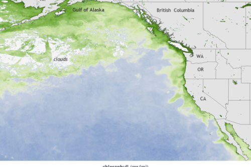 Scientists link toxic algal blooms along U.S. West Coast to warm waters in the Pacific